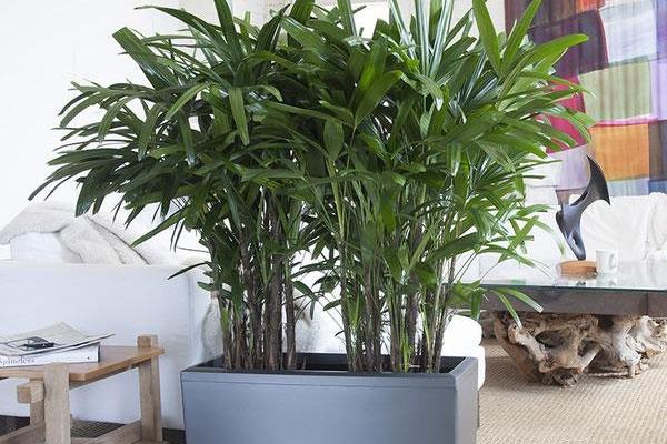 Piante Ufficio Ossigeno : Depurare l aria di casa e dell ufficio con le piante ecco quali